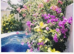 veracruz -puerto: trato directo: casa con alberca y jardÍn